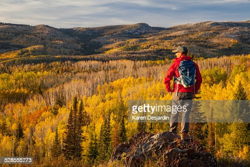 Hiker looking over view of fall colored aspens