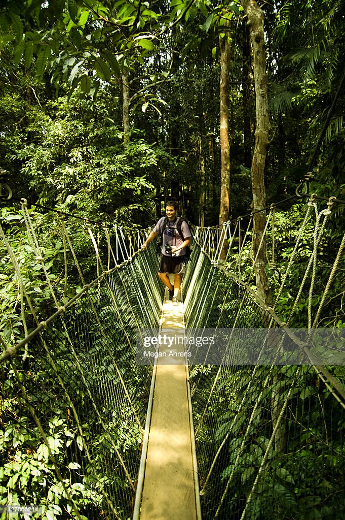 Hiker on canopy walkway : Stock Photo