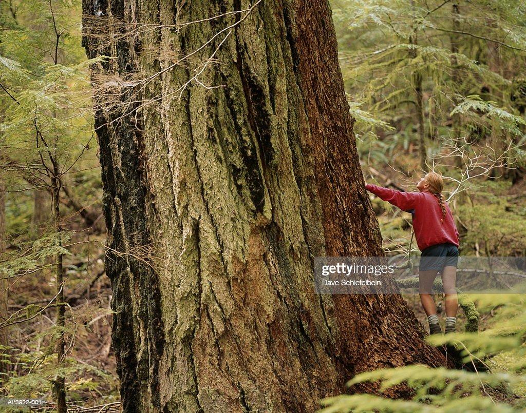 Hiker standing next to old growth Douglas Fir tree, Washington, USA : Stock Photo