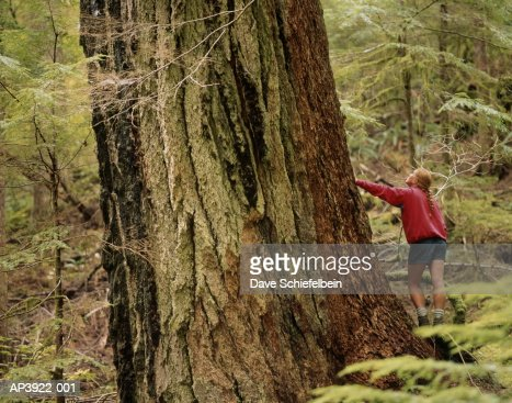 Hiker standing next to old growth Douglas Fir tree, Washington, USA : Foto de stock