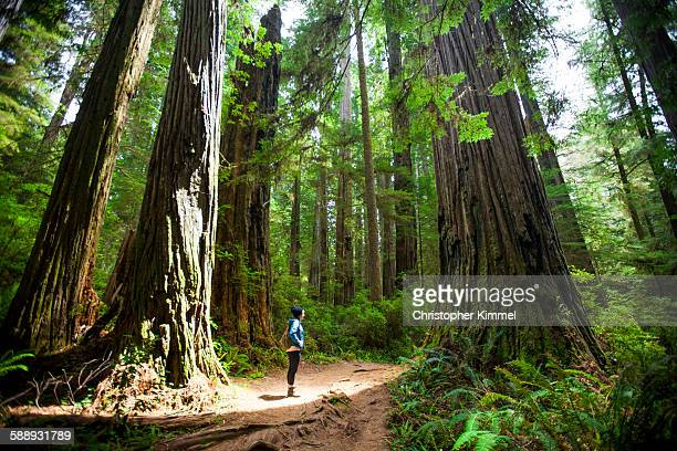 A hiker stands amongst giant Redwood Trees while visiting Stout Grove, Jedediah Smith Redwoods State Park.