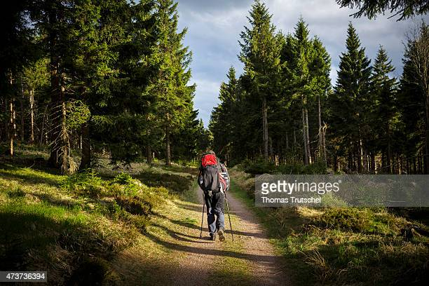 Hiker walking on the hiking trail Rennsteig in the Thuringian Forest on May 06 2015 in Suhl Germany Photo by Thomas Trutschel/Photothek via Getty...