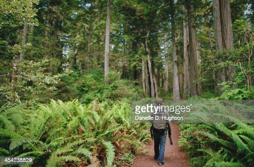 Hiker Walking Through Giant Ferns : Stock Photo