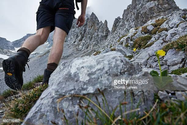 A hiker walks to the 'Lampsenspitze' at the Karwendel region on June 13 2014 near Vomp Austria The Karwendel is the largest range of the Northern...