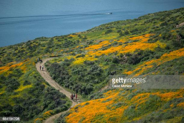 Hikers are surrounded by flowers after prolonged record drought gave way to heavy winter rains causing one of the biggest wildflower blooms in years...