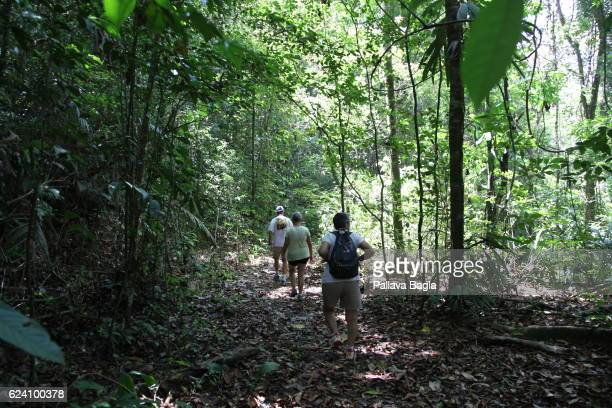 Hikers exploring the rain forest French Guiana is haven for plants and animals with ninety percent of the area under tropical rainforests the country...