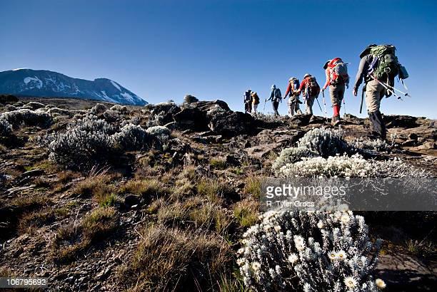 Hikers trek towards Mt. Kilimanjaro mid-morning as the peak lurks in the distance.