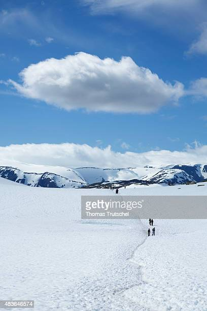 Hikers walk on a snowy plateau in Hardangervidda in the province Hordaland in Norway on July 07 2015