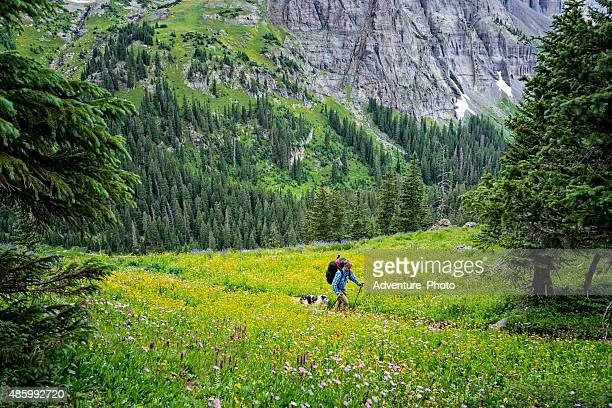 Hiking Among Beautiful Wildflowers and Mountain Scenery