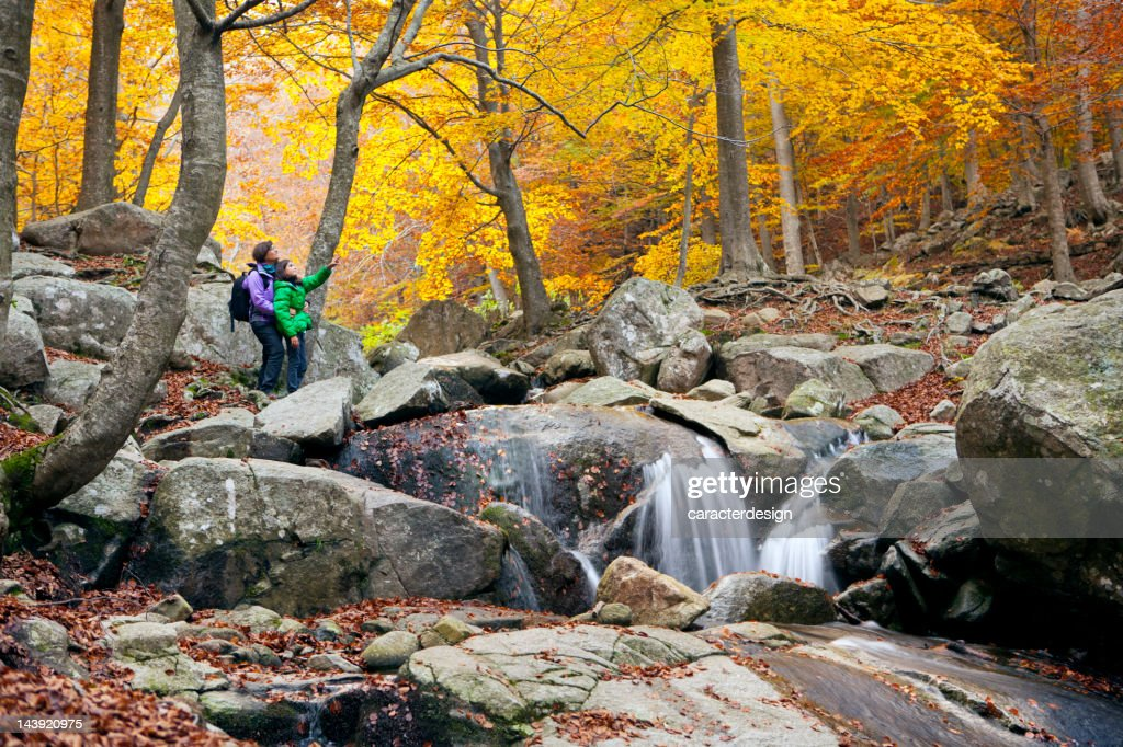 Hiking at a wonderful forest in autumn : Stock Photo