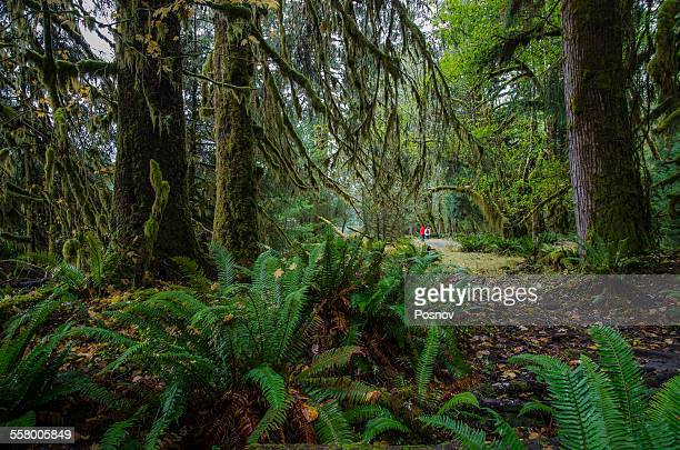 Hiking in Hoh Rain Forest