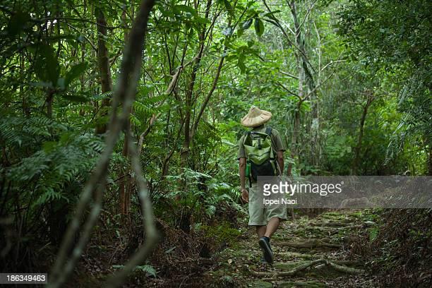 Hiking in lush rainforest, Okinawa, Japan