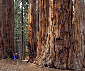 Hiking in Sequoia National Park, California, USA