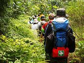 Jungle trekking in a tropical rain forest.