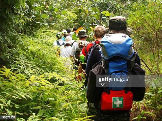 ジャングルでハイキングします。