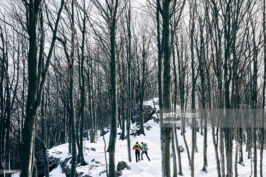 Hiking in the snowy forest : Stock Photo