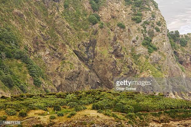Hiking in Waitakere Ranges by Tasman Sea, West coast of Auckland.
