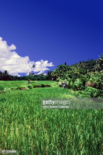 Hiking on Catanduanes Island
