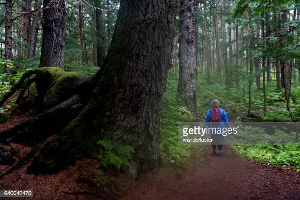 Hiking past a giant tree in Alaska