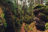 hiking path through forest landscape