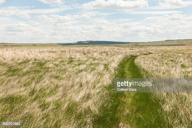 Hiking Path through grasslands