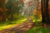 Hiking Path through Beech Tree Forest with Sunrays in Autumn