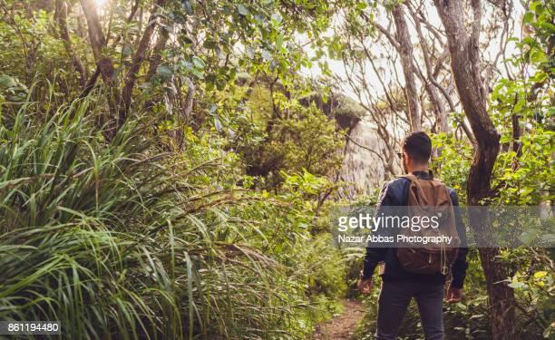 Hiking through bush in New Zealand.