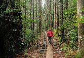 Hiking through cedar forest