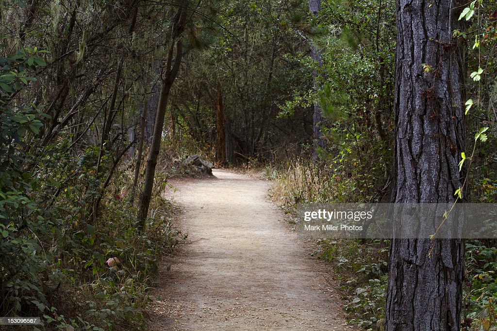 Hiking Trail at Point Lobos State Preserve : Stock Photo