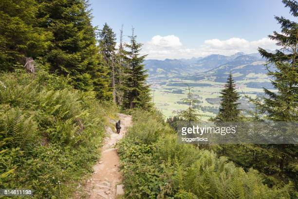 Hiking trail in the Bavarian Alps