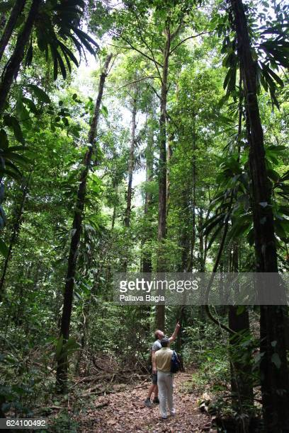 A hiking trail in the rain forests French Guiana is haven for plants and animals with ninety percent of the area under tropical rainforests the...