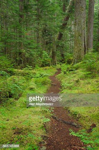 Hiking trail North Cascades