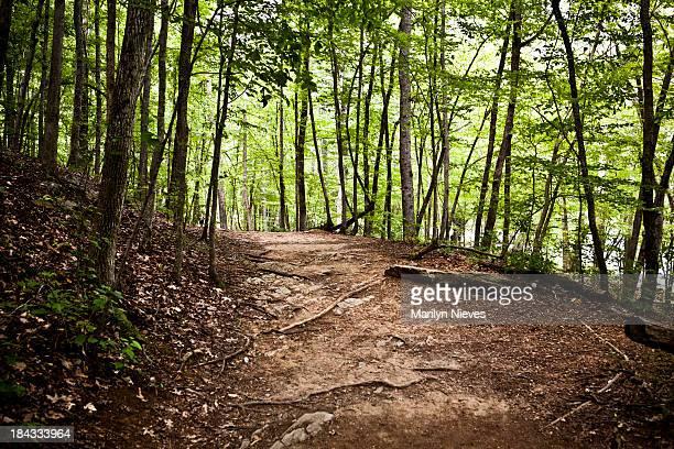 Sentier de randonnée à travers la forêt de Georgia state park