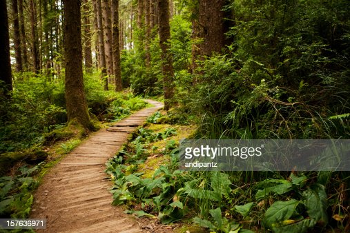 Hiking trail through the redwoods