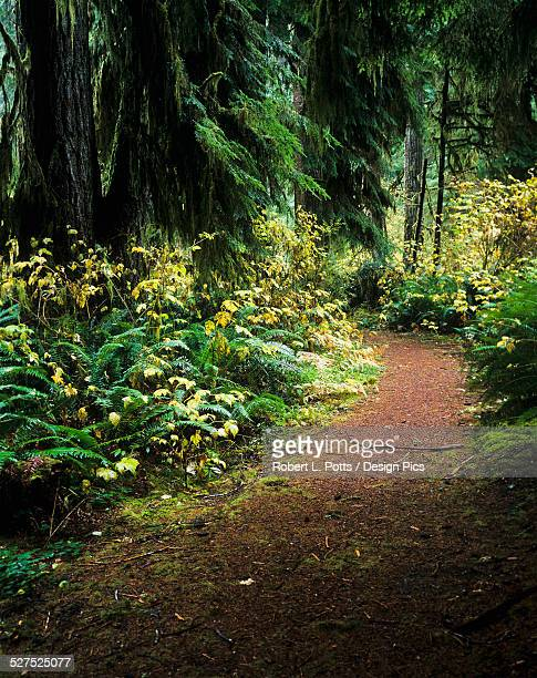 A hiking trail winds through the forest