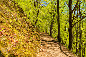 Hiking trail on a hillside in a beech forest on a sunny day. Soderasen national park in Sweden.