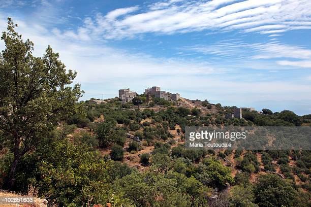 Hill with olive trees in Greece