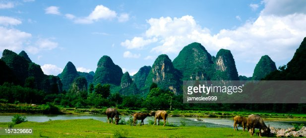 Hills and water buffalo