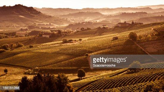 丘とブドウ園