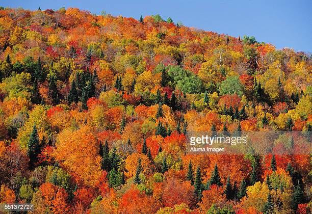 Hillside in full autumn colours