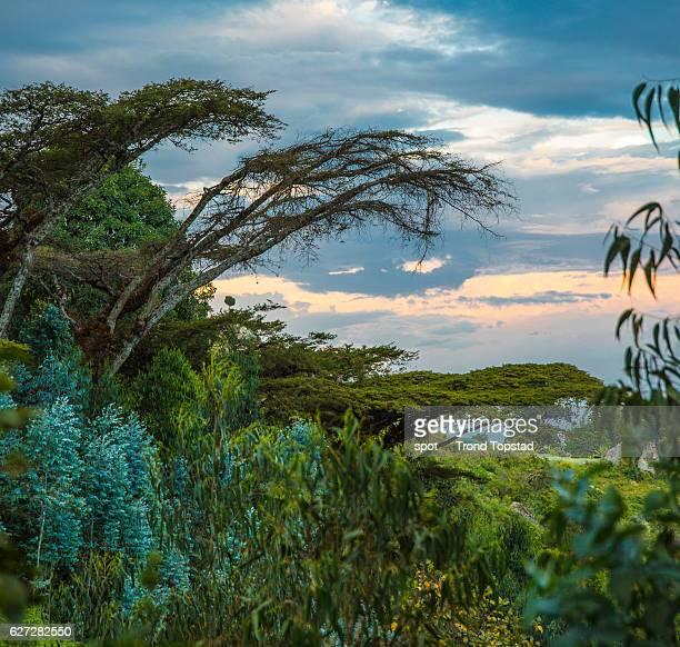 Hillside landscape, Ethiopia