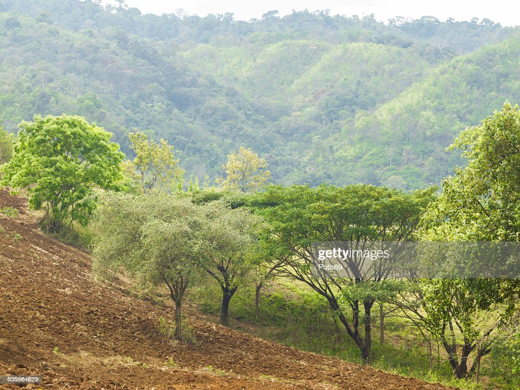 Hillside planting areas. : Stock Photo