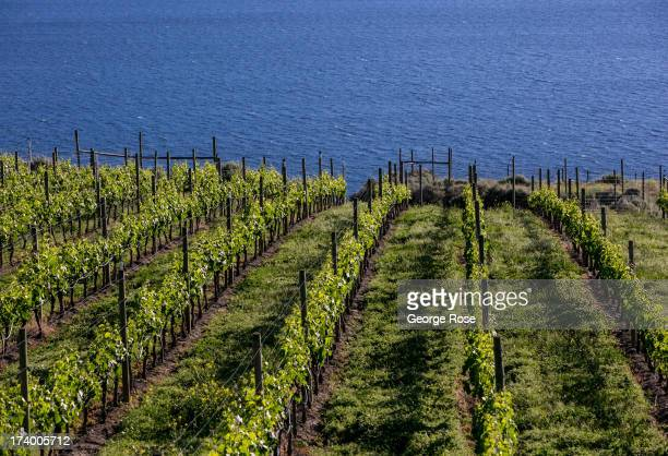 Hillside vineyards in the Naramata Bench wine region near downtown Penticton June 9 2013 in Penticton British Columbia Canada Located across the US...
