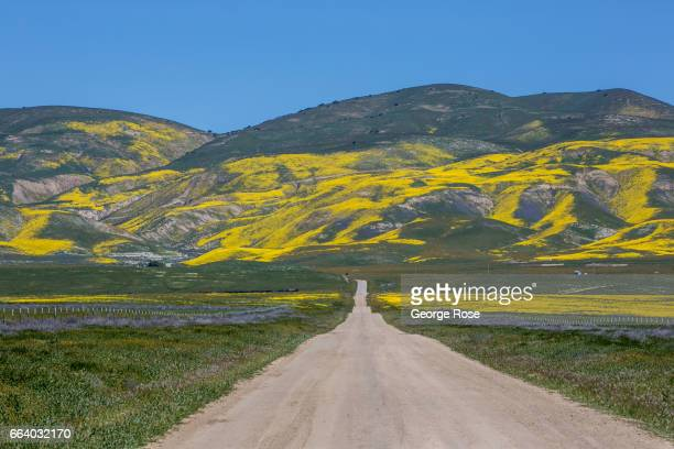 Hillsides and pastures covered in a carpet of wildflowers are drawing thousands of visitors this spring to Carrizo Plain home to thousands of...