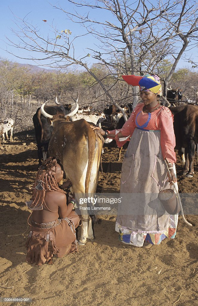Himba tribe woman milking cow, Herero tribe woman in Victorian dress : Stock Photo