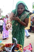 Hindu Devotee offers milk to a Cobra snake on the occasion of 'Nag Panchami' festival during the holy Shrawan Month Nag Panchami is a traditional...