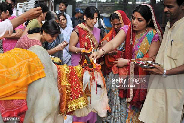 Hindu devotees worship a sacred cow on the eve of Gopastami in Hyderabad on November 3 2011 The Gopastami festival which commemorates Hindu Lord...