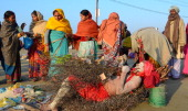 Hindu sadhu sleeping on bed of thorns on the banks of Sangam where Hindu devotees are gathered to take holy bath on the occasion of Basant Panchami...