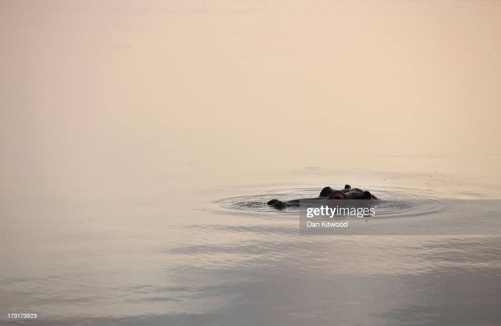 A Hippopotamus breaches the water in a pool in Kruger National Park on July 8, 2013 in Lower Sabie, South Africa. The Kruger National Park was established in 1898, and is South Africa's premier wildlife park, spanning an area of approximately 2 million hectares.