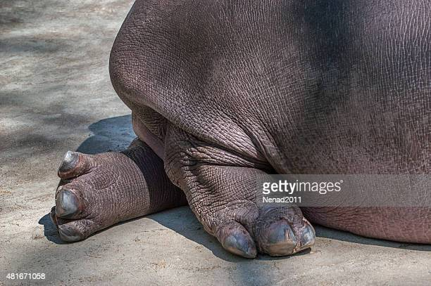 Hippo toes! Beauty, grace.